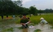 Ninh Bình: CSGT, Công an 2 huyện được huy động giúp dân gặt lúa chạy lũ