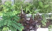 Tự chế thuốc trừ sâu an toàn cho vườn rau nhà bạn