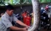 Nghệ An: Người dân thất thần thấy con trăn đang ngậm con dê 10kg