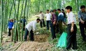 Cấp hơn 3.000 tấn gạo cho người trồng rừng ở Thanh Hóa