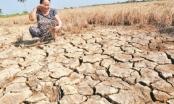 231,5 tỷ đồng khắc phục hậu quả hạn hán và xâm nhập mặn
