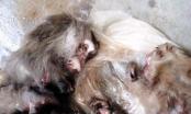 Thanh Hóa: Truy tìm tung tích thanh niên giết khỉ dã man đăng trên facebook