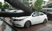 Ô tô bị đè bẹp sau bão: Có thể truy trách nhiệm chủ sở hữu cây xanh