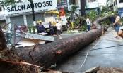 TP HCM: Liên tiếp xảy ra việc cây đổ đè chết người