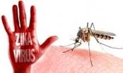 Bộ Y tế: Xử phạt người chống lệnh diệt vi rút Zika