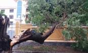 """Bão số 4 khiến hàng loạt cây xanh Huế """"nghiêng ngả"""""""