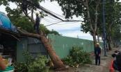 TP HCM: Cây xanh đổ đè nhà dân trong cơn mưa