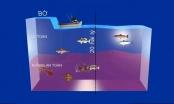 Công bố mới nhất về môi trường biển và chất lượng hải sản 4 tỉnh miền Trung