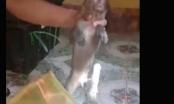 Nghệ An: Bắt xe khách vận chuyển 8 cá thể khỉ đang sống đến nơi tiêu thụ