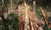 Đắk Lắk: Ba đối tượng phá rừng bảo tồn thiên nhiên Ea Sô bị bắt tạm giam