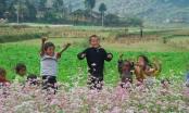Chùm ảnh ấn tượng về vẻ đẹp hoa Tam giác mạch Hà Giang