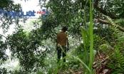 Hà Giang: Phát hiện nam thanh niên chết trong tình trạng treo cổ
