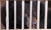 Đắk Lắk: Cứu hộ thành công sáu cá thể gấu