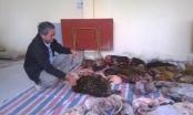 Thanh Hóa: Tịch thu gần 600 kg động vật thuộc nhóm quý hiếm