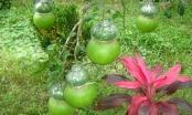 Độc đáo tạo hình trái cây ngày Tết