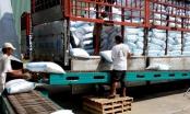 Điểm báo ngày 6/1/2017: Điều kiện kinh doanh xuất khẩu gạo đã thông nhưng chưa thoáng