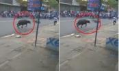 [Clip]: Trâu điên húc người gây náo loạn đường phố ở Đồng Nai