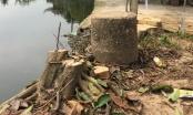 Hà Nội: Nghiêm cấm chặt cây xanh khi dẹp vỉa hè