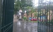 Hà Nội: Mưa to kèm theo gió lớn, một cây xà cử đổ làm 4 học sinh nhập viện