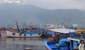 Đà Nẵng: Xử lý vấn đề môi trường tại Âu thuyền và Cảng cá Thọ Quang