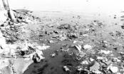 """Bình Định: Không khí ô nhiễm, người dân """"tố"""" lò mổ gia súc"""