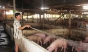 Hà Nam: 60% dân Ngọc Lũ 'khốn' vì nuôi lợn