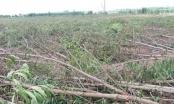 Đồng Nai: Lộ diện thủ phạm đốn hạ hơn 10ha rừng tràm trong một đêm