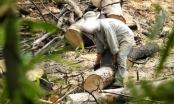 Kỳ 1- Đắk Nông: Lâm tặc mở đại công trường trên rừng Đắk Song
