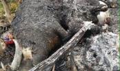 Hà Giang: Sét đánh chết cả đàn trâu, thiêu rụi nhiều tài sản