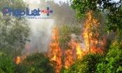 Vĩnh Phúc: Nắng nóng khiến 15ha rừng bị thiêu cháy ở Tam Đảo