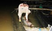 Quảng Nam: Dùng ghe máy ngụy trang cho 40 phách gỗ lậu