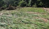 Phú Thọ: 290 ha lúa và hoa màu bị thiệt hại do ảnh hưởng của cơn bão số 2