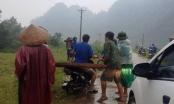 Quảng Bình: Nhiều đối tượng hành hung kiểm lâm viên