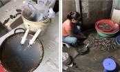 Hà Nội: Bắt quả tang một cơ sở đang bơm tạp chất vào tôm