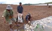 Kon Tum: Đề nghị công ty thủy điện hỗ trợ 2,4 tỉ đồng cho các hộ dân có cá chết trắng
