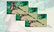 Bản tin Facebook ngày 19/8: Sự trở lại của Hotgirl thổ dân trong tà áo dài