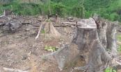 Nghệ An: Hàng chục ha rừng bị tàn phá, nhiều cán bộ bị kỷ luật