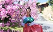 Đà Nẵng: Tưng bừng Lễ hội giao lưu văn hóa Việt - Hàn trong vòng 1 tháng