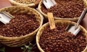 Vụ tranh chấp hợp đồng mua bán cafe tại Gia Lai: Giao hồ sơ vụ án cho Tòa tỉnh xử sơ thẩm lại