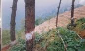 """Kỳ 1 - Vĩnh Phúc: Đốn rừng thông trồng su su, một vụ phá rừng """"khôn khéo""""?"""