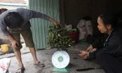 Nghệ An: Xôn xao mua cau non bán cho thương lái xuất ngoại