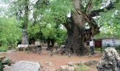 Bắc Giang: Phê duyệt Quy hoạch chi tiết xây dựng Khu du lịch cây Dã Hương nghìn năm tuổi