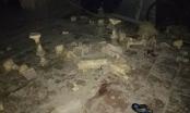 16 học sinh ngã ở trường tiểu học Văn Môn do chơi trò đuổi bắt cắn nhau
