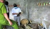 Khánh Hòa: Xét xử vụ tàng trữ xác rùa biển lớn nhất thế giới ở TP Nha Trang