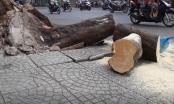 TP HCM: Cây xanh bật gốc, 2 người bị thương