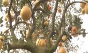 Chào xuân Plus 2018: Độc đáo, cây tượng trưng cho mâm ngũ quả tròn đầy trong ngày Tết