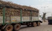 Đắk Lắk: Xe mía quá khổ ngang nhiên chạy qua chốt CSGT