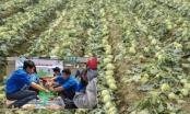 """Bản tin Kinh tế Plus: """"Giải cứu"""" hàng nghìn tấn nông sản """"ế"""" cho nông dân"""