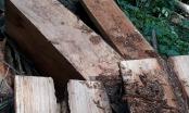 Kỳ 2 - Tận diệt rừng đầu nguồn ở Yên Bái: Hạt kiểm lâm huyện Văn Chấn không phát hiện ra phá rừng(!?)