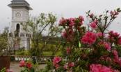 Tận mắt ngắm mùa hoa tràn về Fansipan